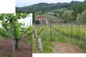 vigne di Boca
